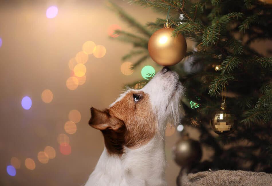 ομορφη-διακοσμηση-χριστουγεννιατικου-δεντρου-κατοικιδια-giftland