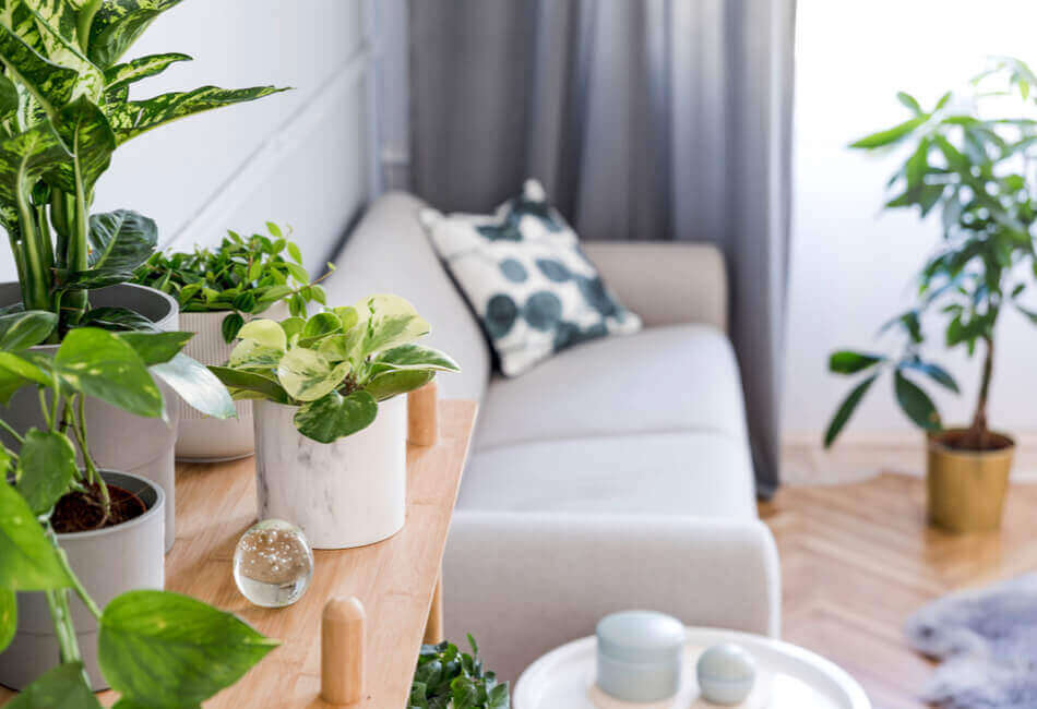 5 Μικρές Αλλαγές που θα Ανανεώσουν το Σπίτι σας τη Νέα Χρονιά - Πράσινο στοιχείο - Giftland